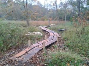 Woodland-Walkway